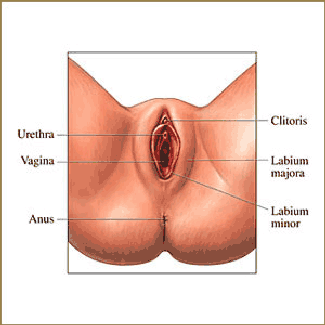Labiaplasty and Vaginal Rejuvenation